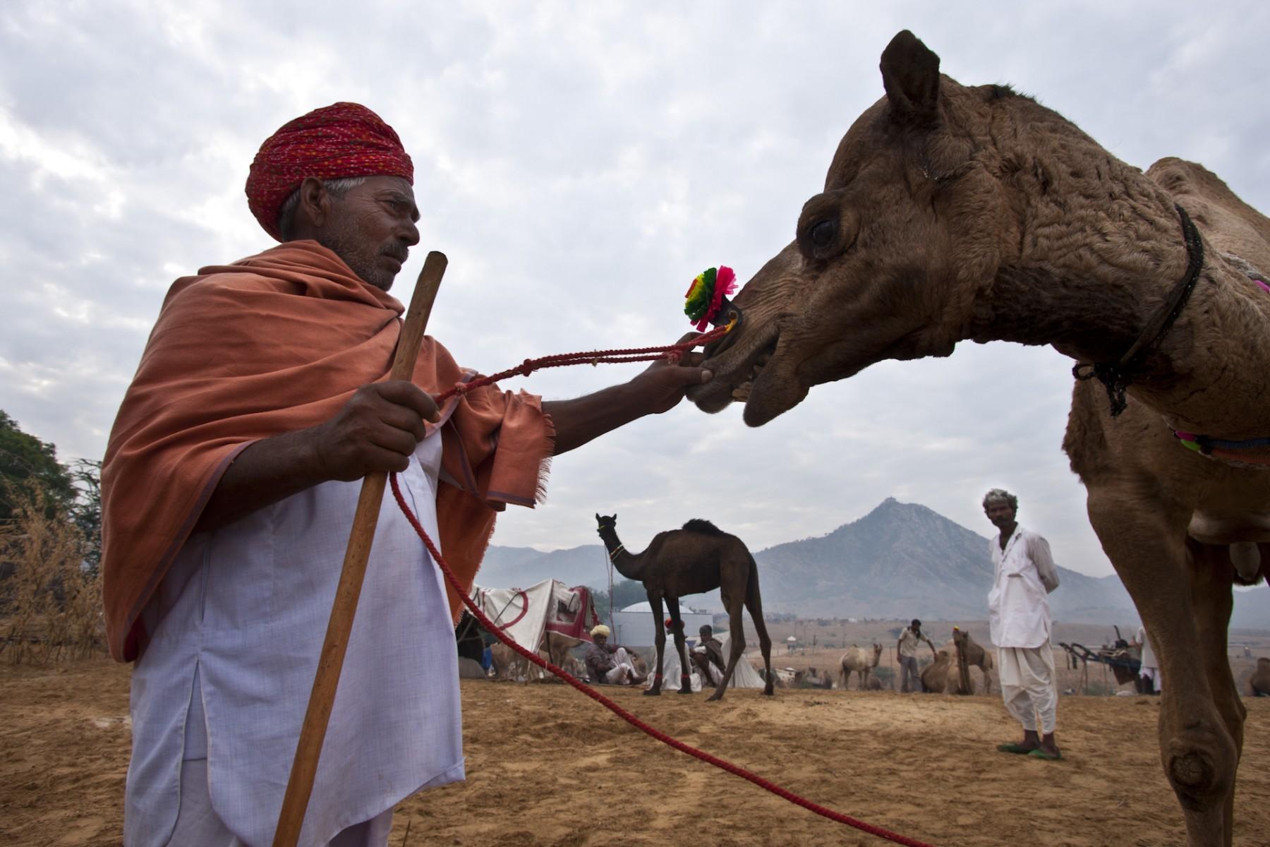 Camel Fair, Pushkar