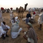 Price negotiation Pushkar camel fair