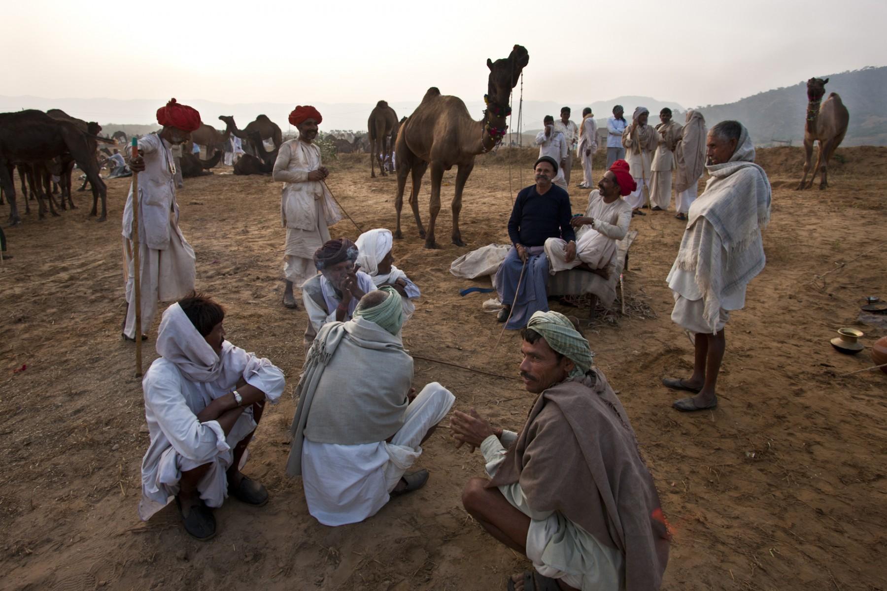 Price negotiation Pushkar camel fair