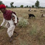 Shepherd, near Barmer, Rajasthan