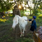 Balbir Singh and horse