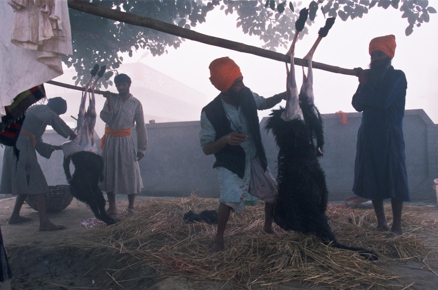 Skinning of the goat