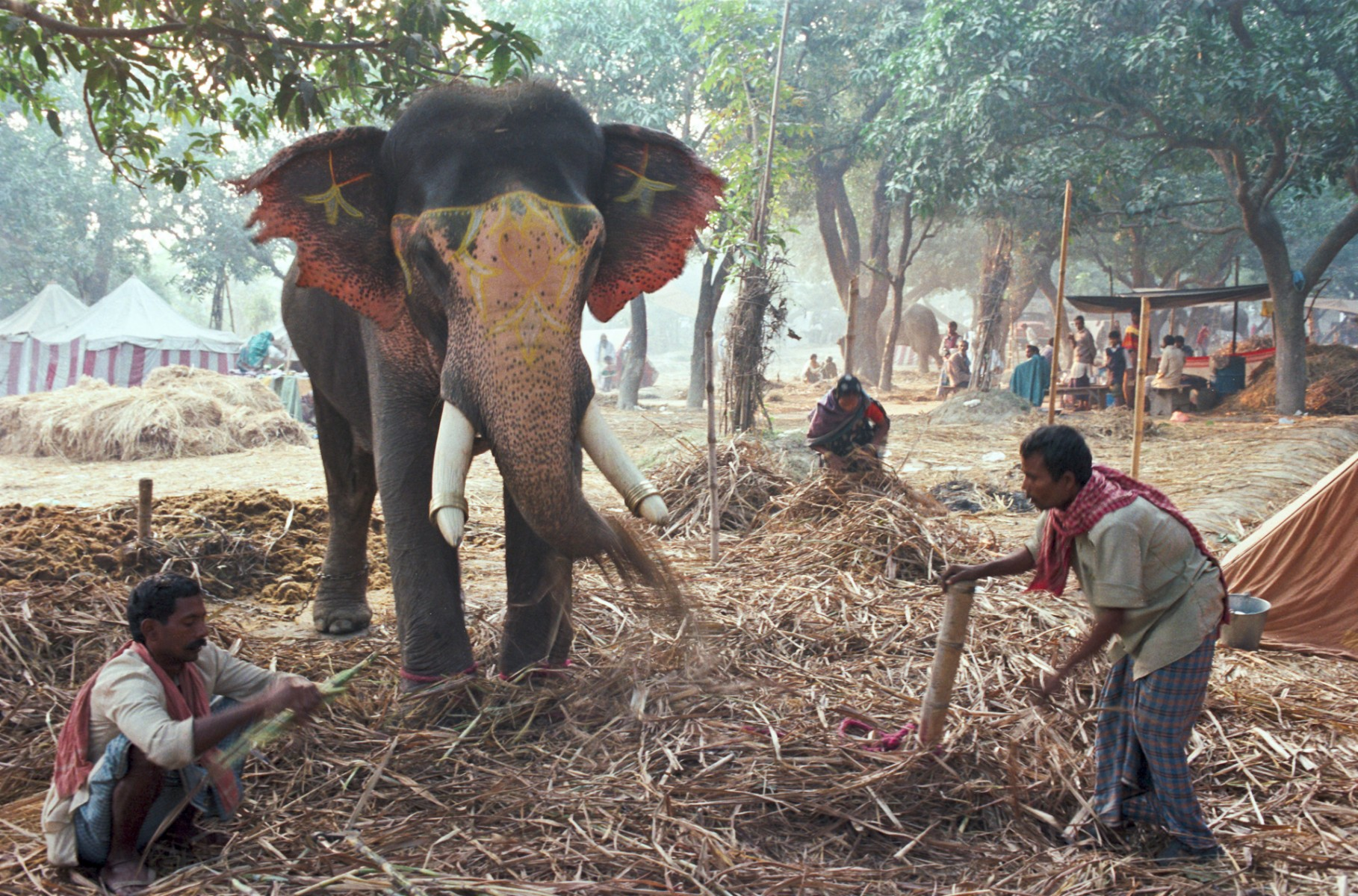 Sonepur elephant fair