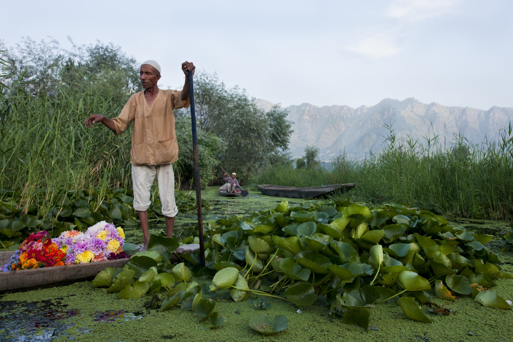 Flower seller Kashmir