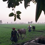 Gulalipura: Punjab