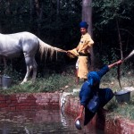 Nihangs washing horses, Sangrur