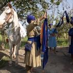Nishan Sahibs and horse