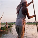 Returning with grass in boats, Majuli