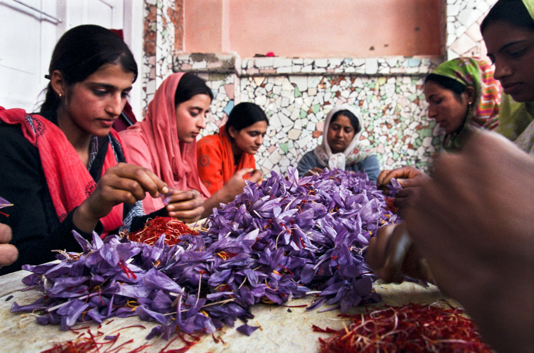 Sorting the saffron at home