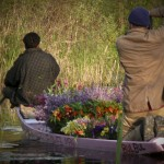 "Travelling with the flower man on Nageen Lake, Srinagar, Kashmir (<a href=""http://dalbirsindia.wordpress.com"" target=""_blank"">Photo by Dalbir Singh</a>)"