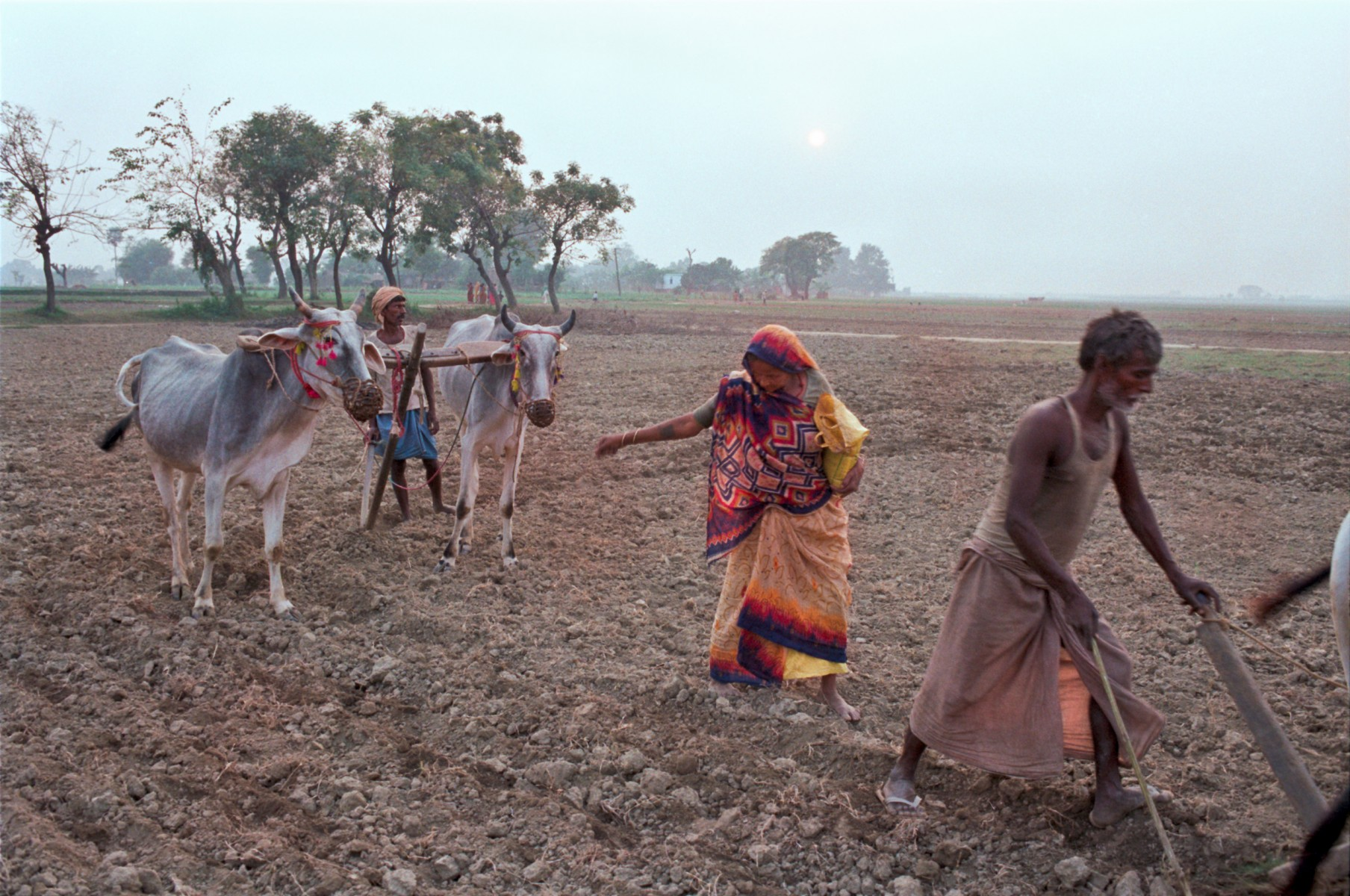 Displaying 18> Images For - Farmer Planting Seeds...
