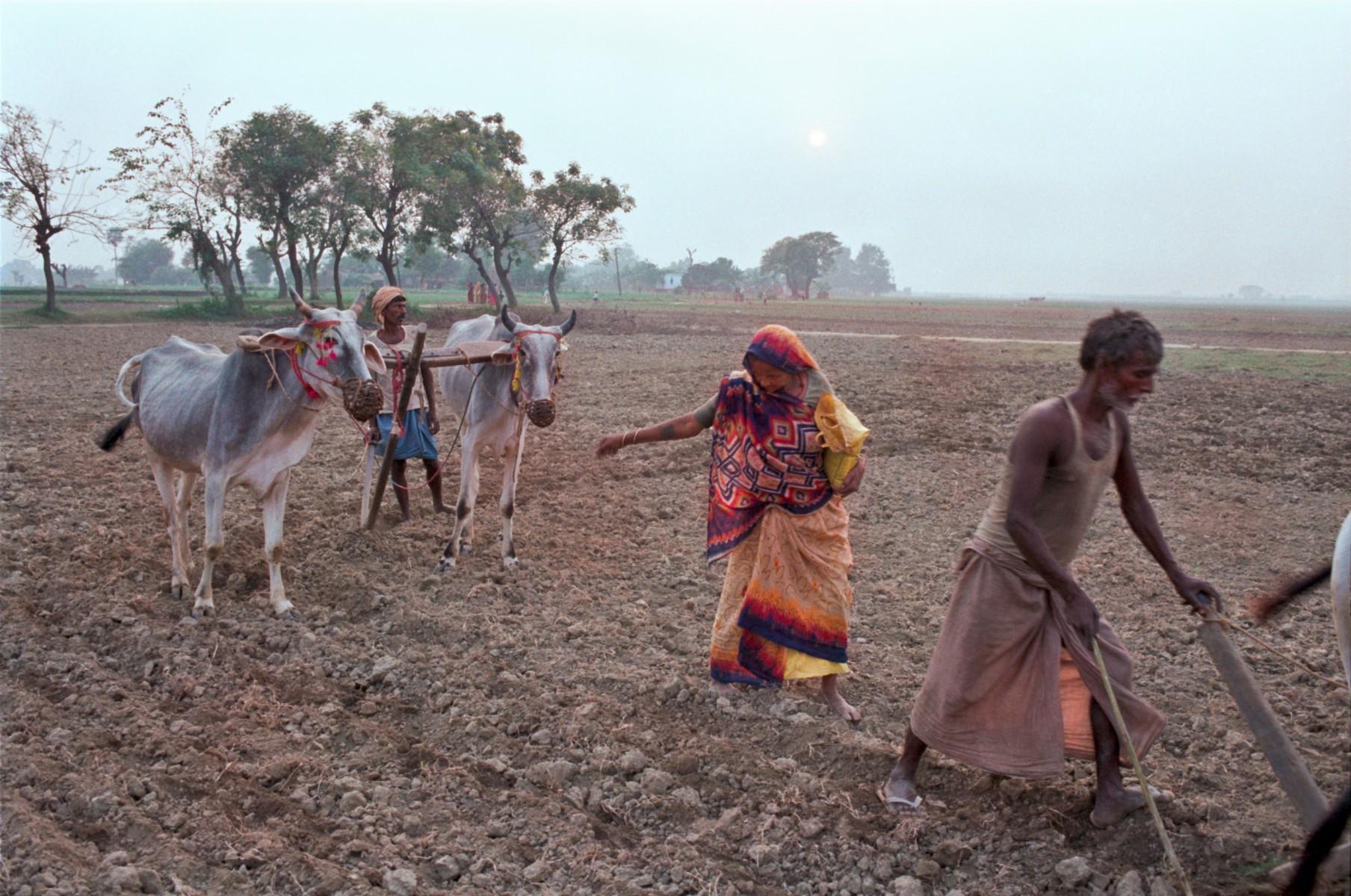 Sowing seeds, Bihar