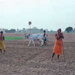 Working the land, Bihar