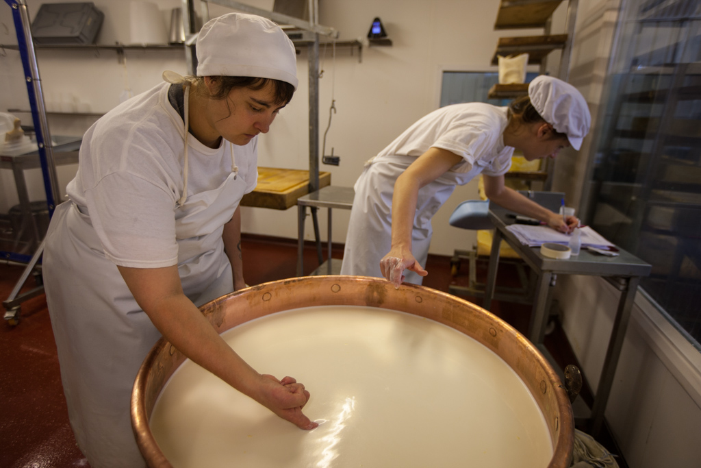 The Bermondsey Hard Pressed cheese is made like a traditional alpage  gruyere. The temperature and the consistency of the milk is carefully checked