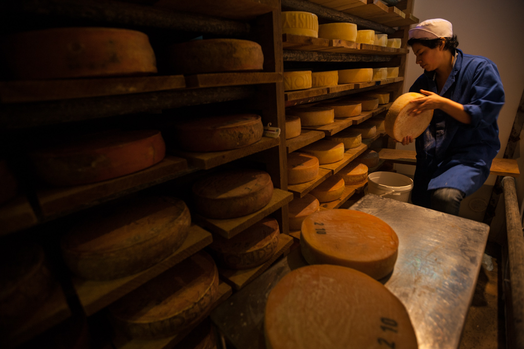 During the maturation period of 6-12 months the wheels of cheese are washed and turned twice a week